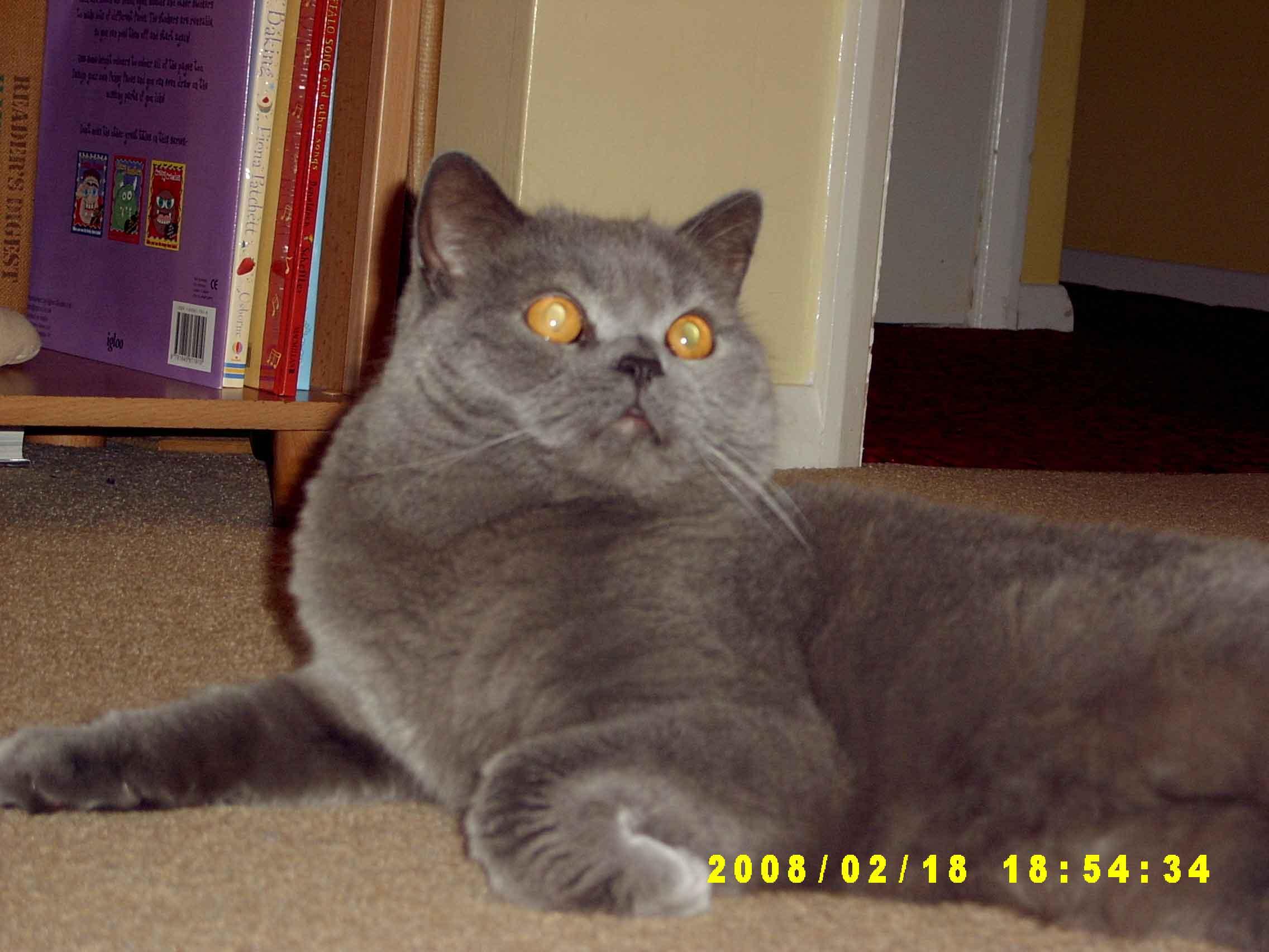 charlie-cat